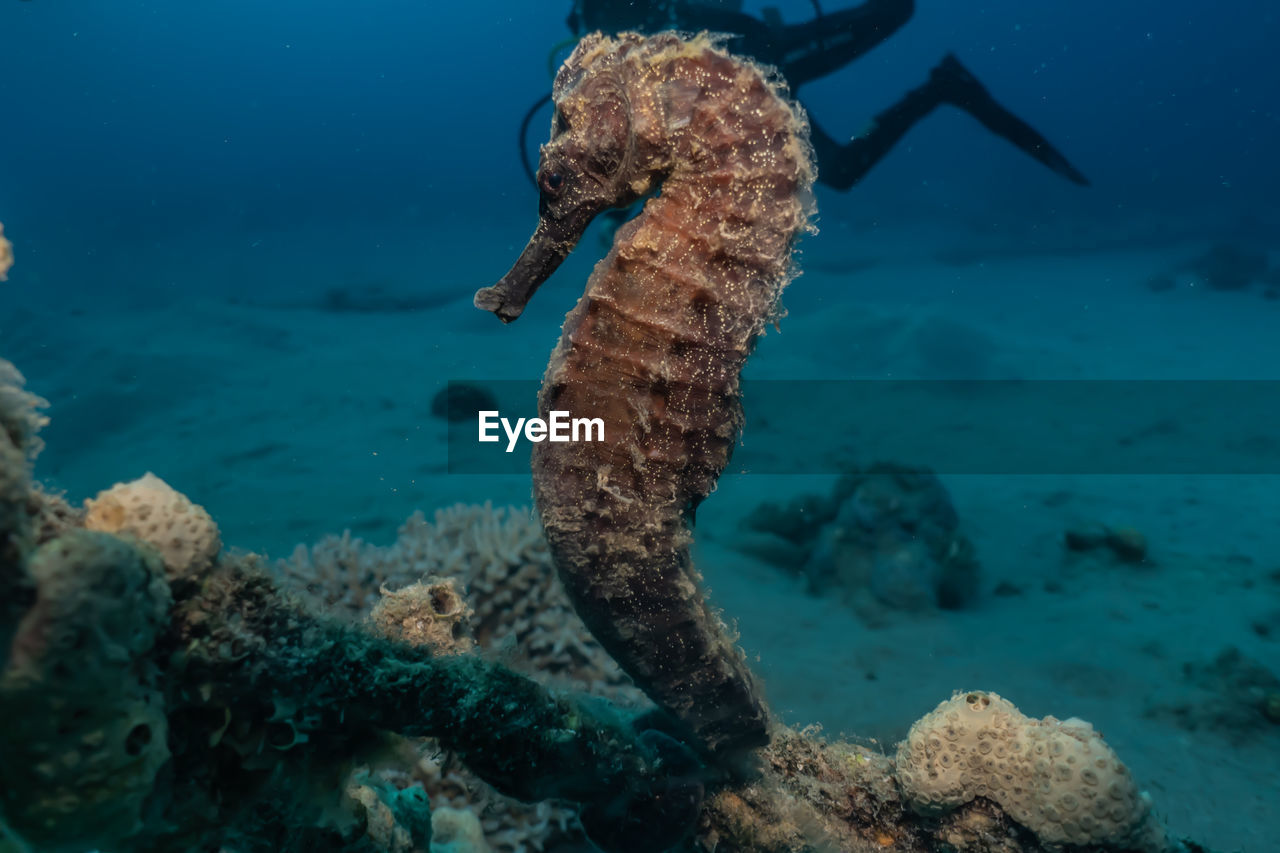 water, underwater, sea, animals in the wild, undersea, animal wildlife, animal themes, sea life, animal, one animal, marine, nature, no people, solid, close-up, rock, rock - object, swimming, vertebrate
