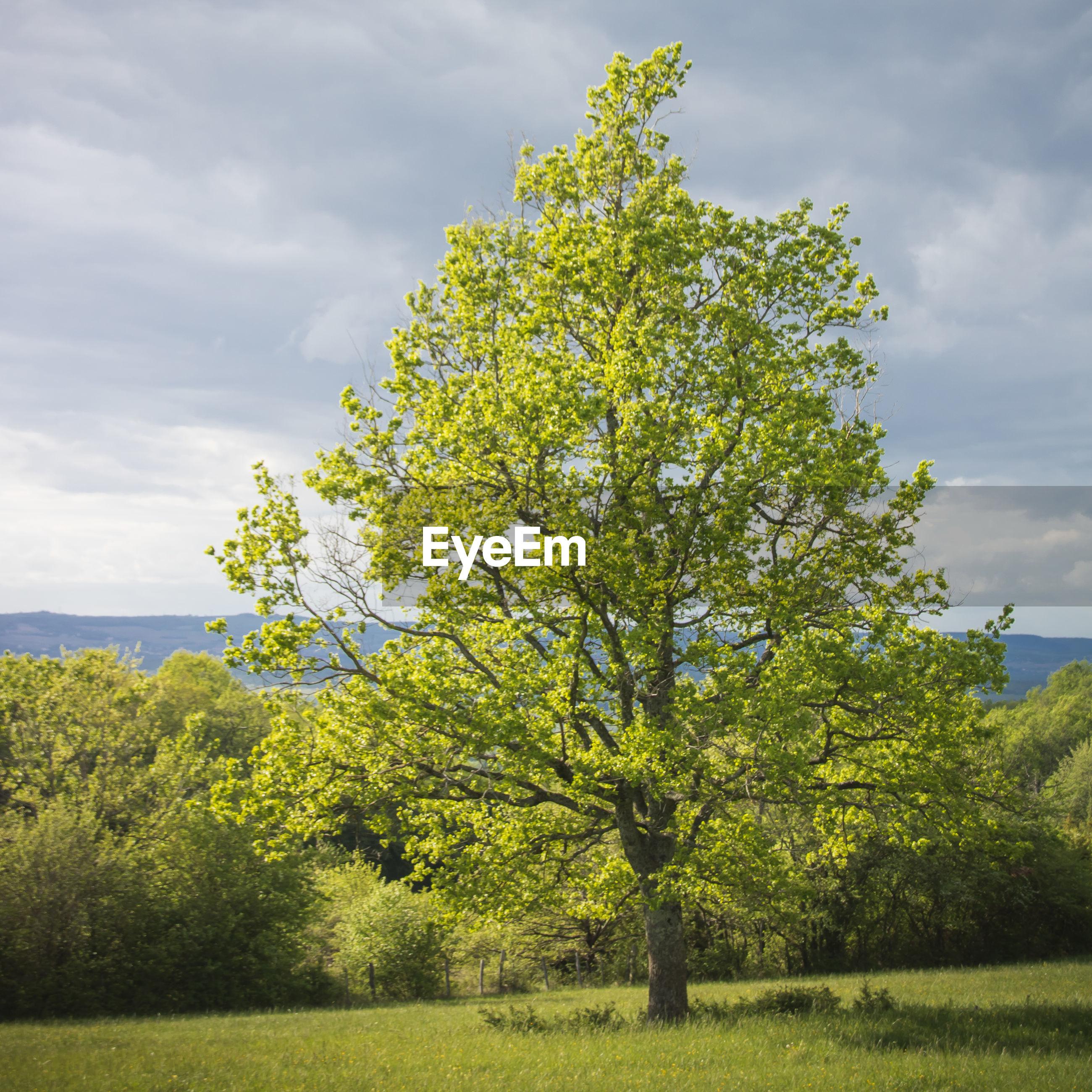 TREE BY PLANTS ON FIELD AGAINST SKY