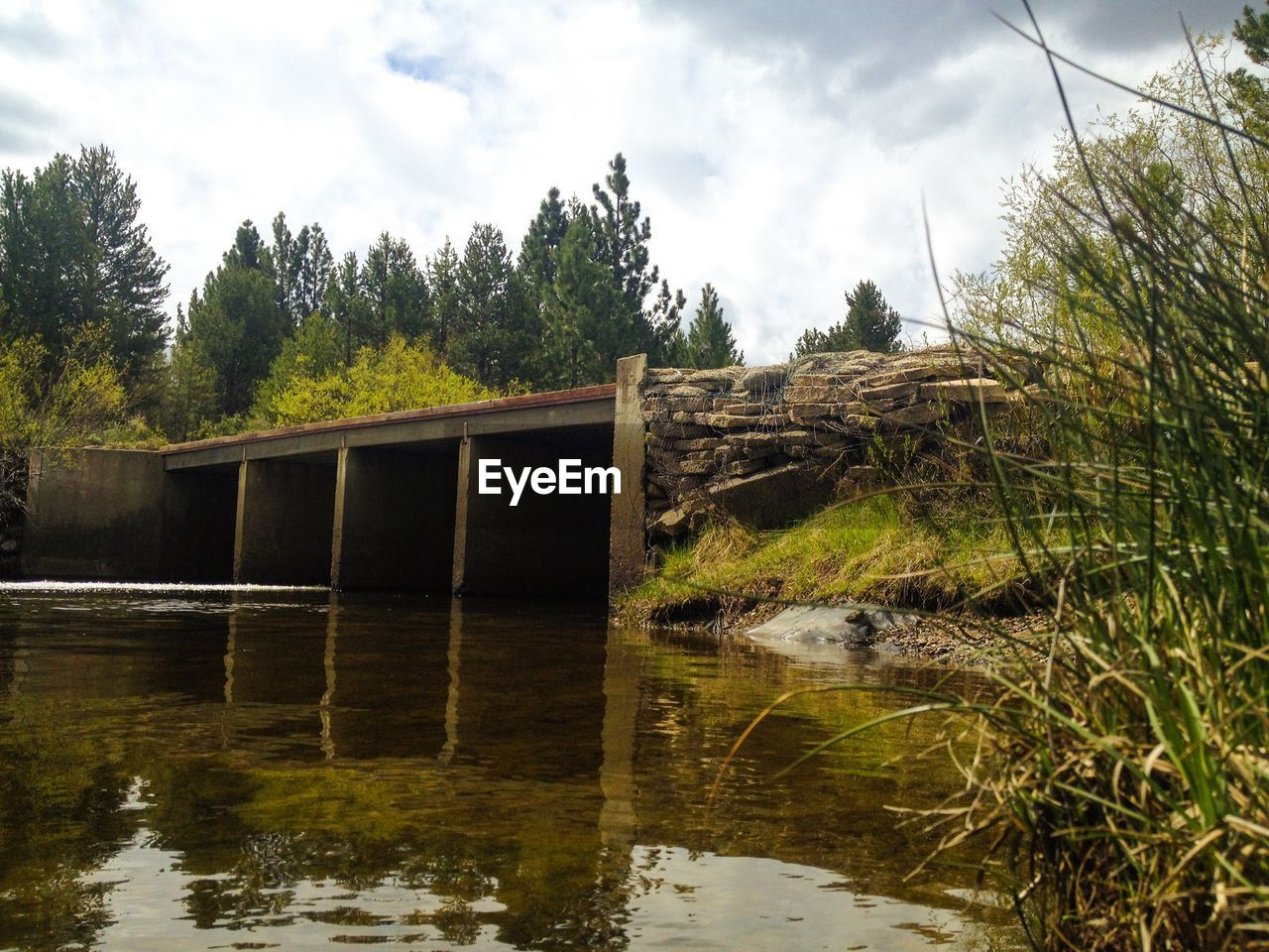 Bridge Passing Through River In Forest