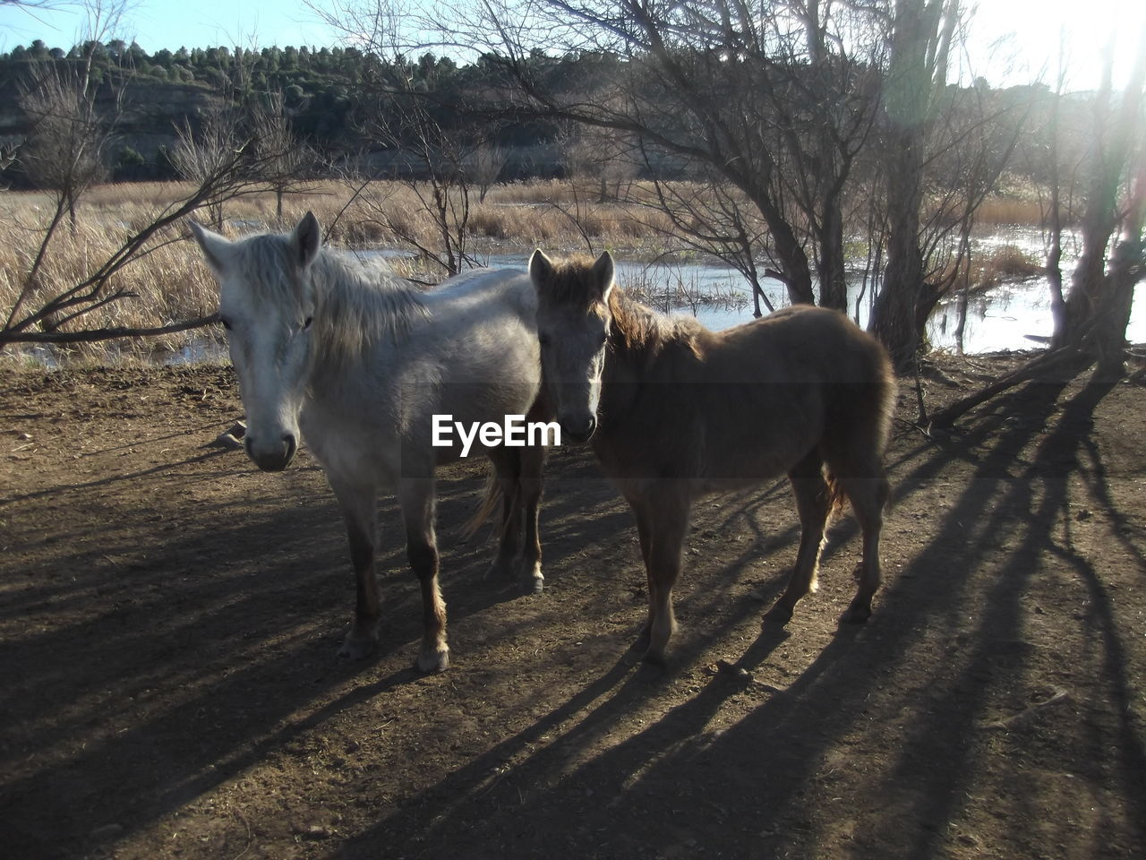 View of two horses
