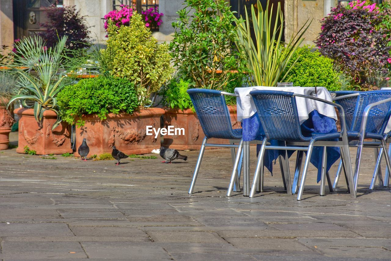 plant, chair, seat, potted plant, nature, no people, growth, day, flower, absence, outdoors, flowering plant, front or back yard, empty, table, wood - material, beauty in nature, footpath, flower pot, container, gardening, paving stone