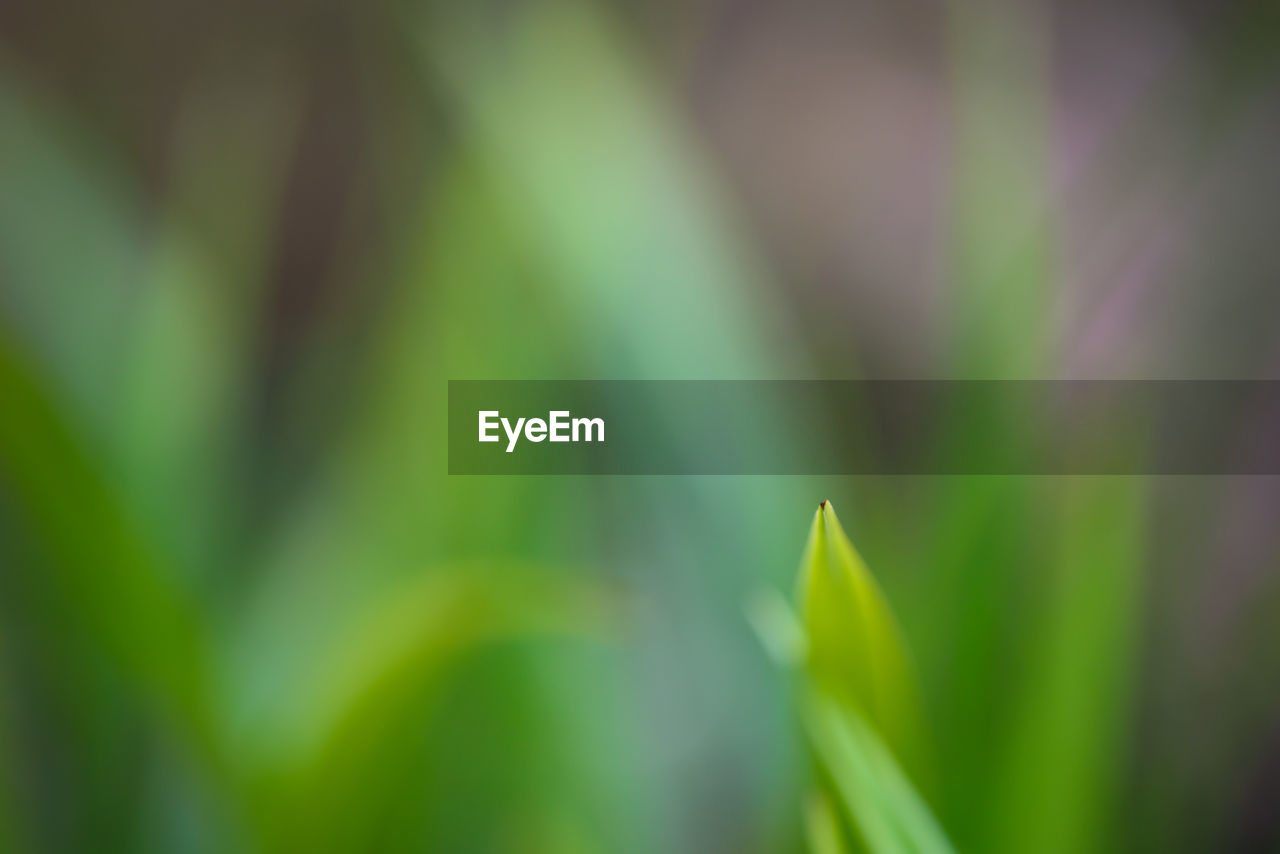 growth, nature, green color, day, plant, beauty in nature, no people, outdoors, tranquility, close-up, fragility, grass, freshness