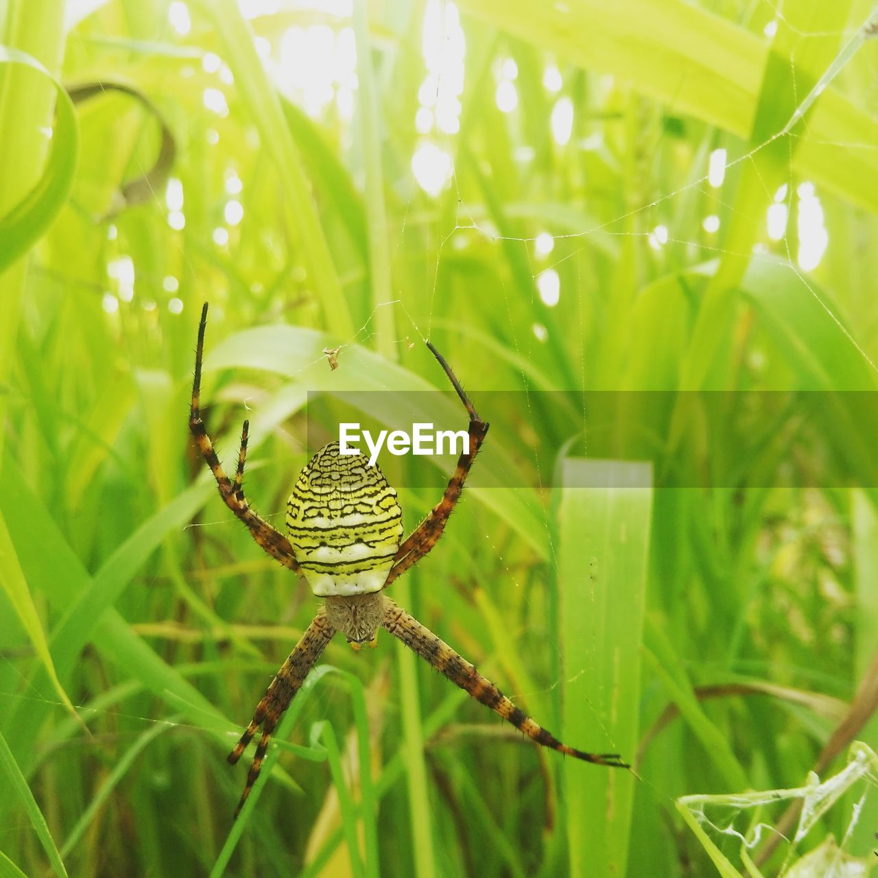 green color, plant, growth, animal wildlife, animals in the wild, beauty in nature, nature, plant part, leaf, animal, close-up, animal themes, day, invertebrate, one animal, no people, insect, focus on foreground, arachnid, spider, outdoors, blade of grass