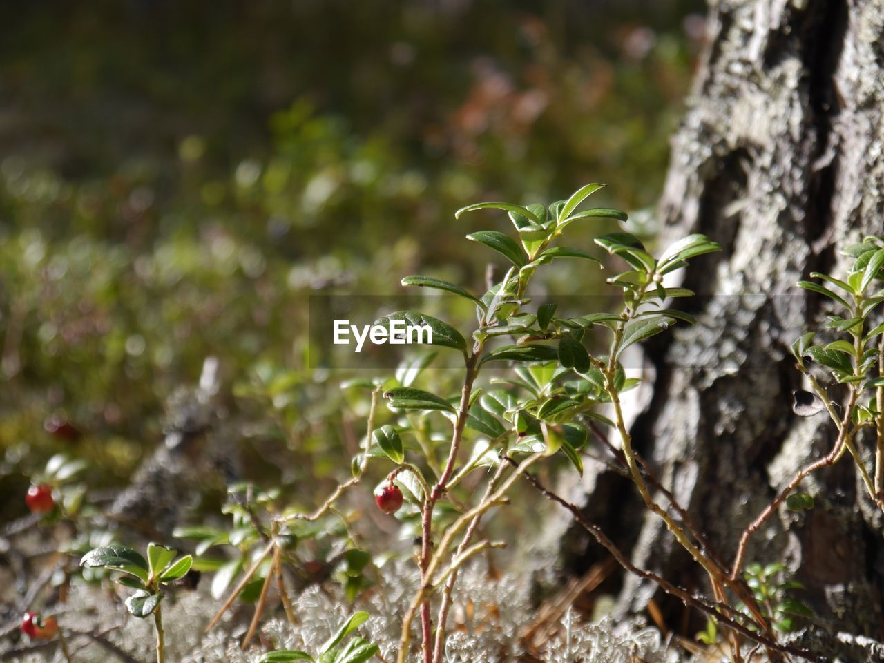 growth, plant, nature, no people, outdoors, day, tree, beauty in nature, close-up, freshness