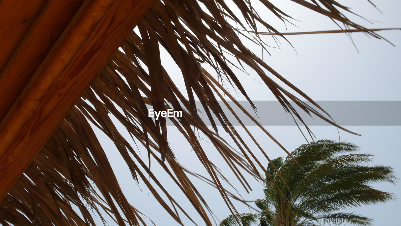 low angle view, plant, tree, palm tree, sky, tropical climate, growth, palm leaf, nature, no people, clear sky, leaf, day, beauty in nature, tranquility, outdoors, plant part, close-up, branch, coconut palm tree, tropical tree