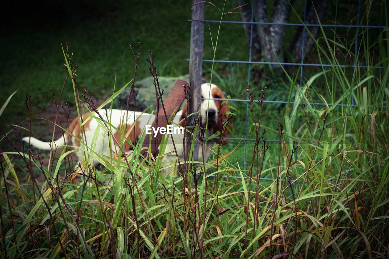 animal themes, one animal, grass, no people, nature, outdoors, mammal, day, animals in the wild, domestic animals, bird