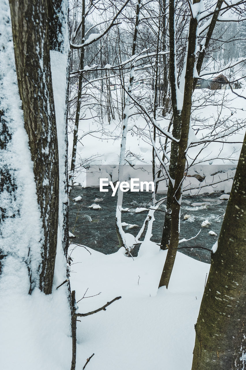 snow, cold temperature, winter, tree, trunk, plant, tree trunk, beauty in nature, tranquility, no people, nature, bare tree, white color, covering, land, branch, scenics - nature, environment, tranquil scene, outdoors, woodland, extreme weather, snowing