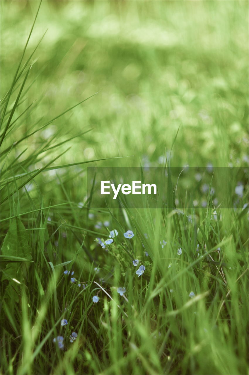 grass, plant, growth, field, selective focus, nature, land, green color, environment, tranquility, beauty in nature, no people, outdoors, landscape, day, close-up, full frame, green, beauty, relaxation, blade of grass, surface level