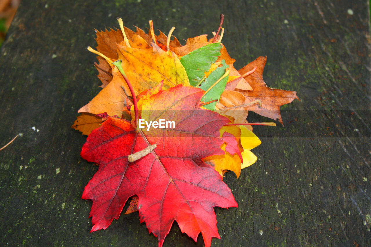 autumn, leaf, change, leaves, maple leaf, maple, nature, day, outdoors, dry, beauty in nature, close-up, focus on foreground, fallen, no people, fragility