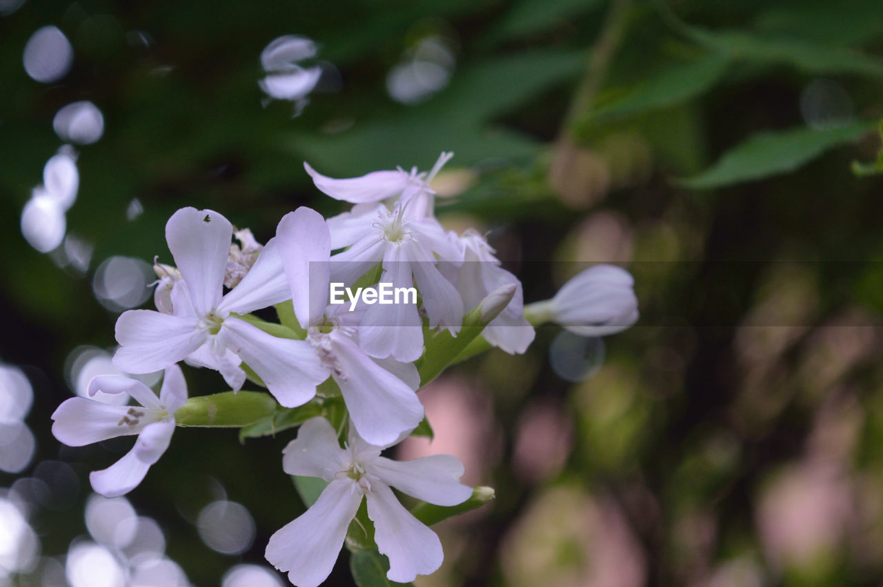 flower, petal, beauty in nature, nature, growth, fragility, plant, white color, blooming, freshness, flower head, no people, outdoors, close-up, day