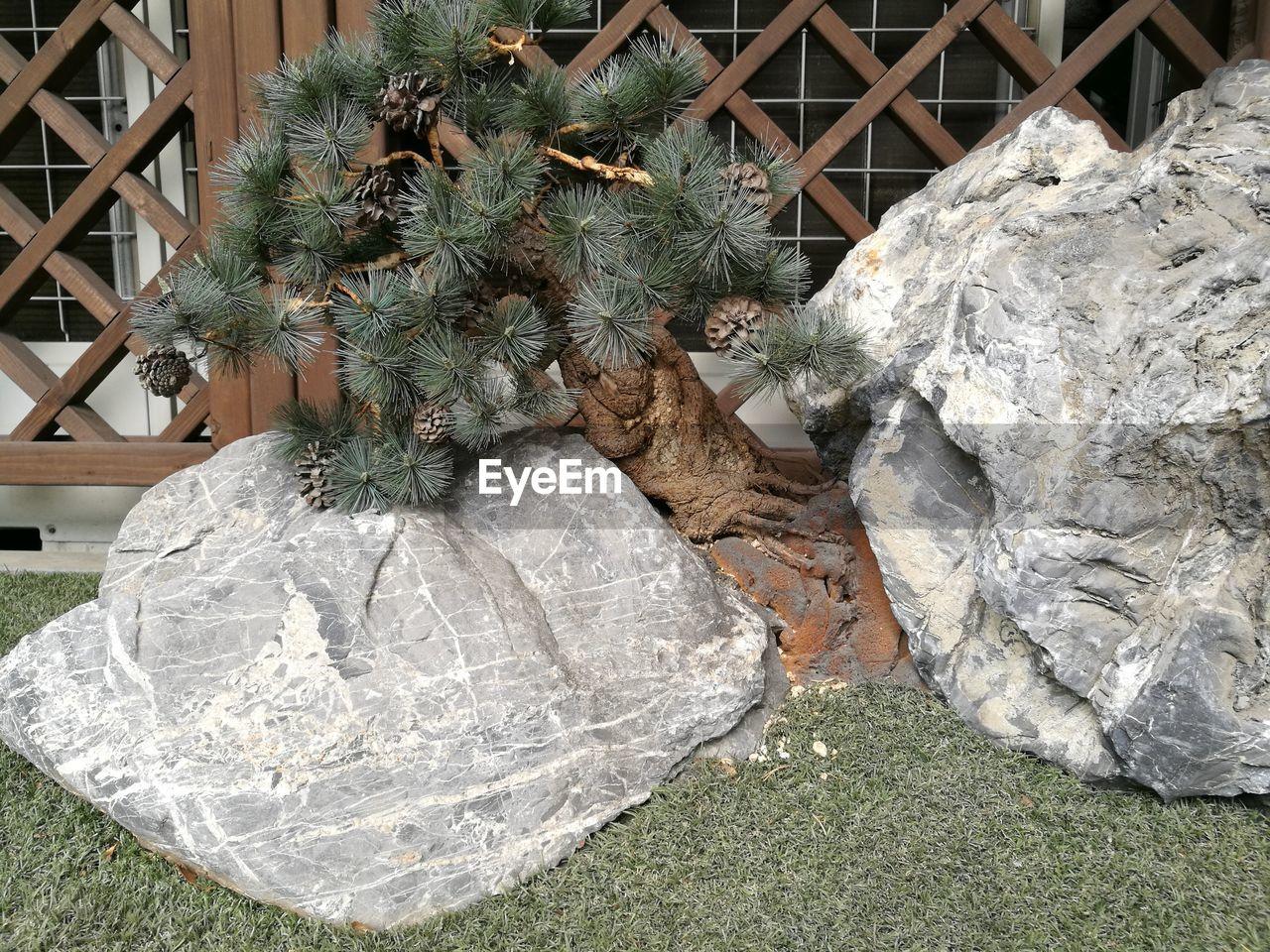 Tree Growing Amidst Rock