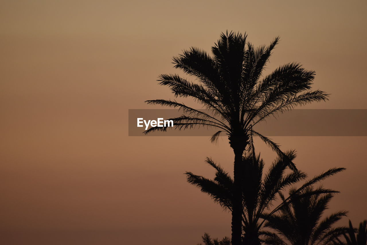 sky, sunset, plant, palm tree, tree, tropical climate, growth, scenics - nature, silhouette, beauty in nature, tranquility, nature, no people, tranquil scene, copy space, orange color, outdoors, clear sky, leaf, date palm tree, palm leaf