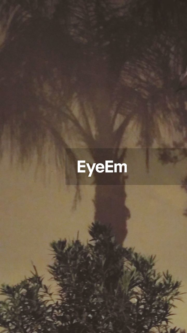 tree, palm tree, nature, no people, silhouette, growth, beauty in nature, sky, tranquil scene, low angle view, outdoors, tranquility, pine tree, scenics, sunset, day, spruce tree, close-up