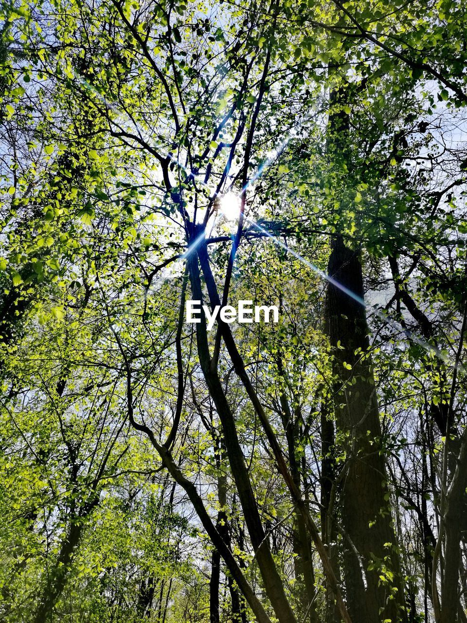 tree, branch, nature, low angle view, growth, beauty in nature, day, forest, no people, outdoors