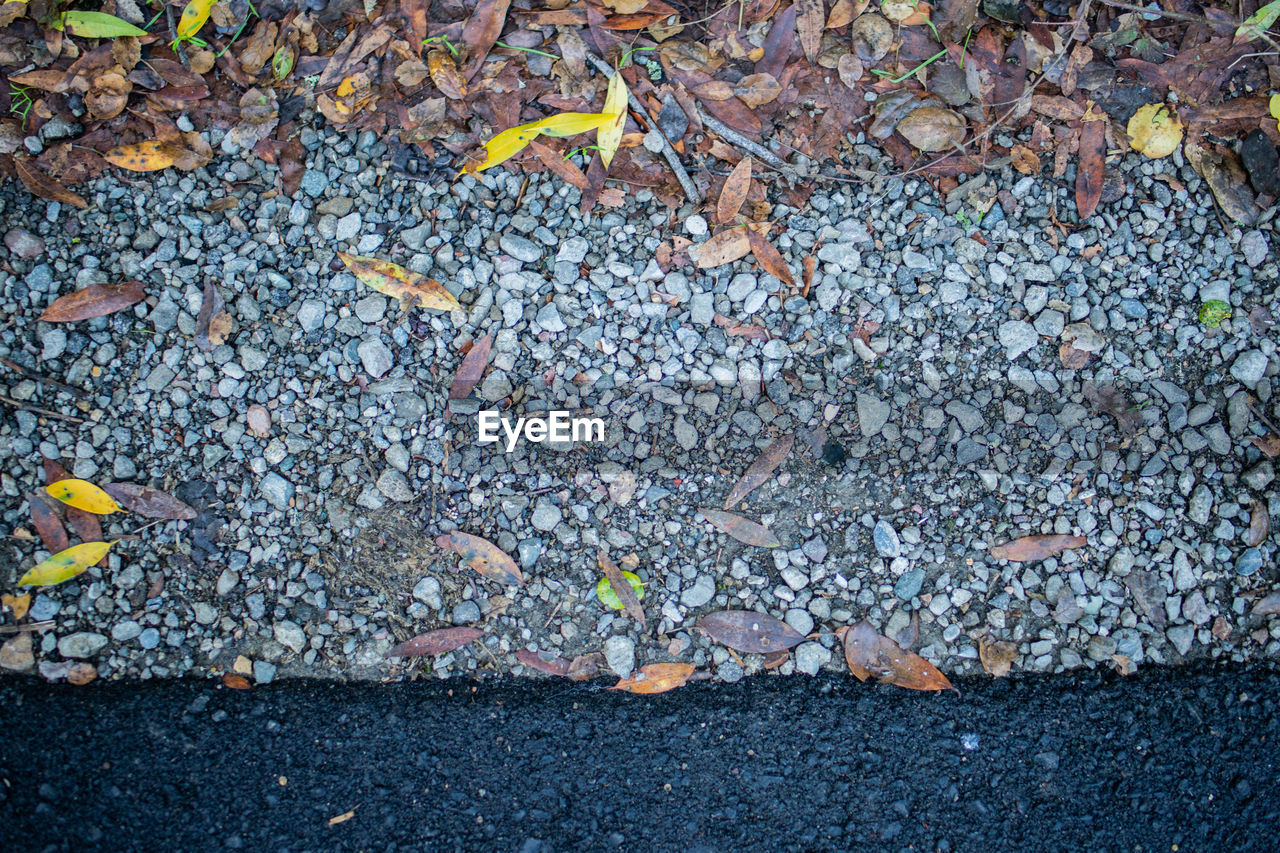 day, no people, leaf, directly above, nature, high angle view, plant part, outdoors, street, solid, close-up, autumn, sign, stone - object, textured, falling, large group of objects, full frame, backgrounds, city, cigarette butt, pebble