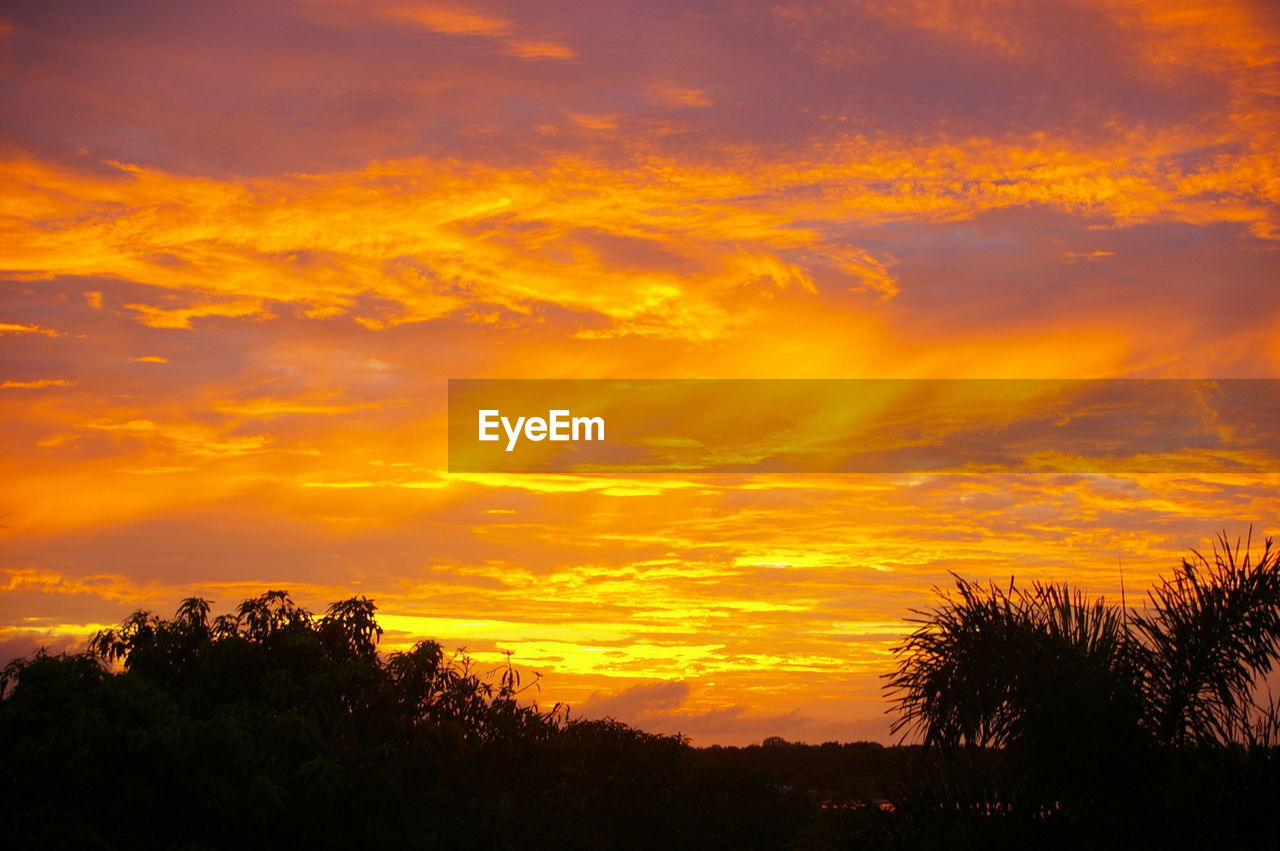 sunset, orange color, tree, silhouette, beauty in nature, sky, scenics, nature, dramatic sky, tranquility, cloud - sky, tranquil scene, no people, low angle view, outdoors, growth, day