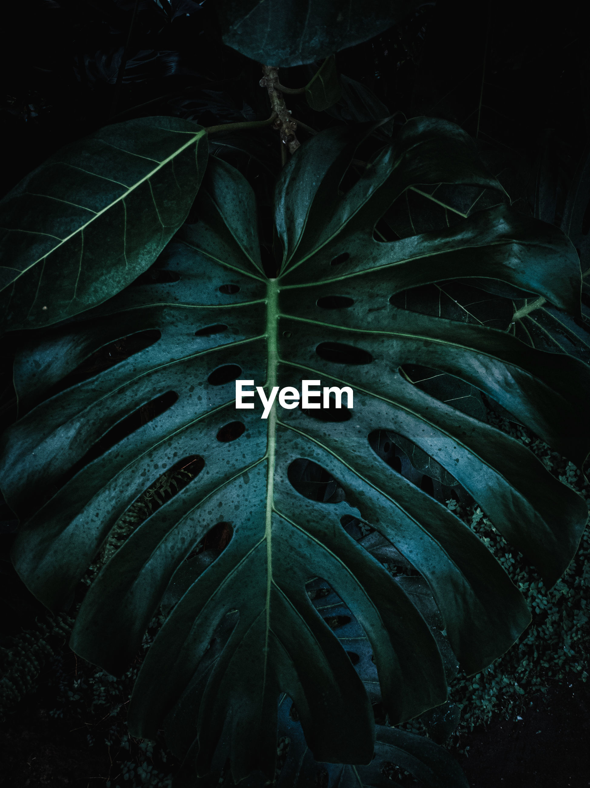High angle view of leaf