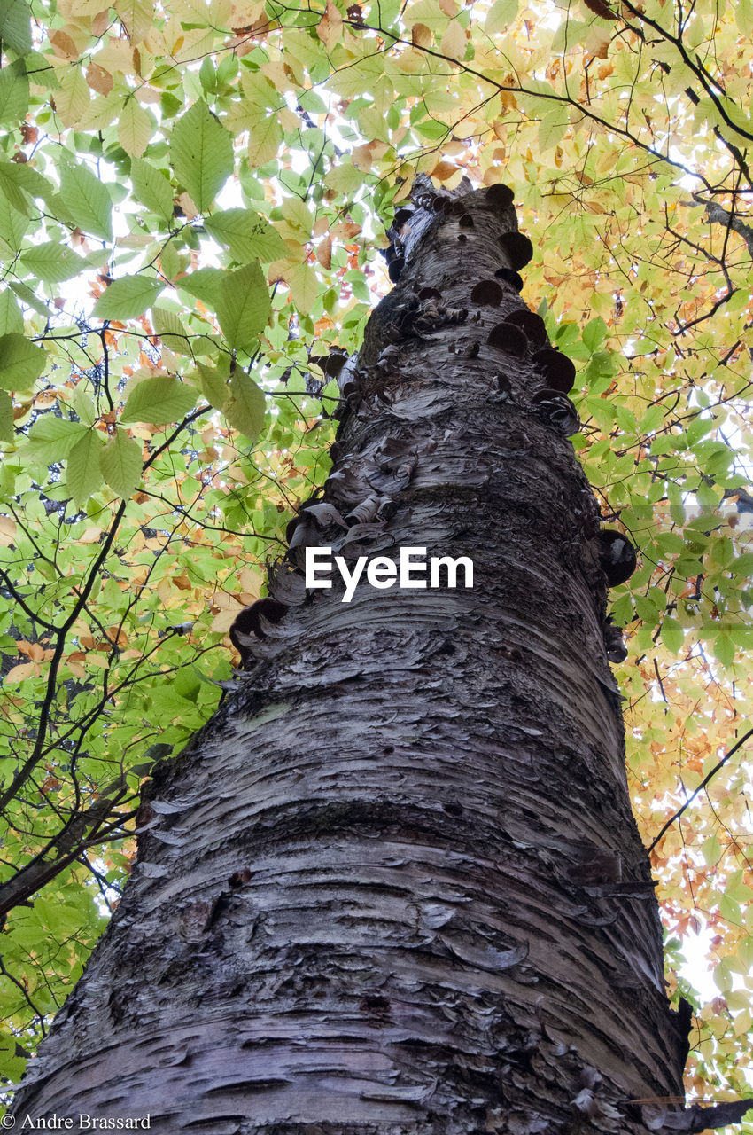 tree, tree trunk, nature, low angle view, growth, branch, bark, textured, day, no people, outdoors, leaf, forest, beauty in nature, close-up