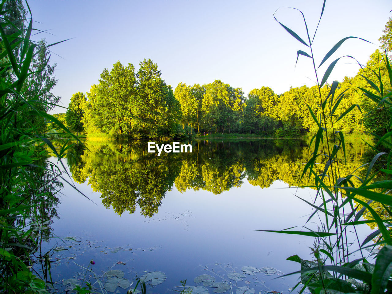 reflection, tree, nature, beauty in nature, lake, plant, water, growth, tranquil scene, green color, no people, outdoors, clear sky, day, sky, scenics