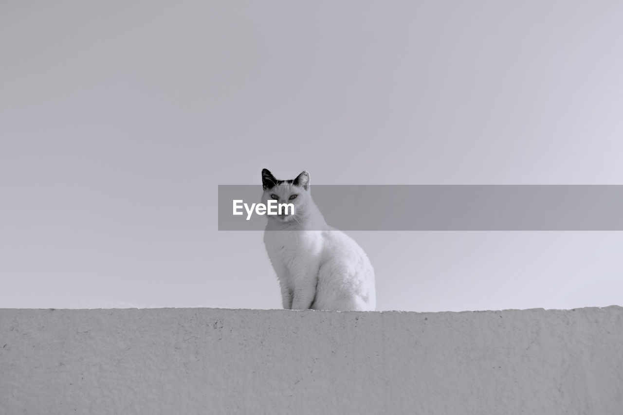 Low angle portrait of cat sitting on retaining wall against sky