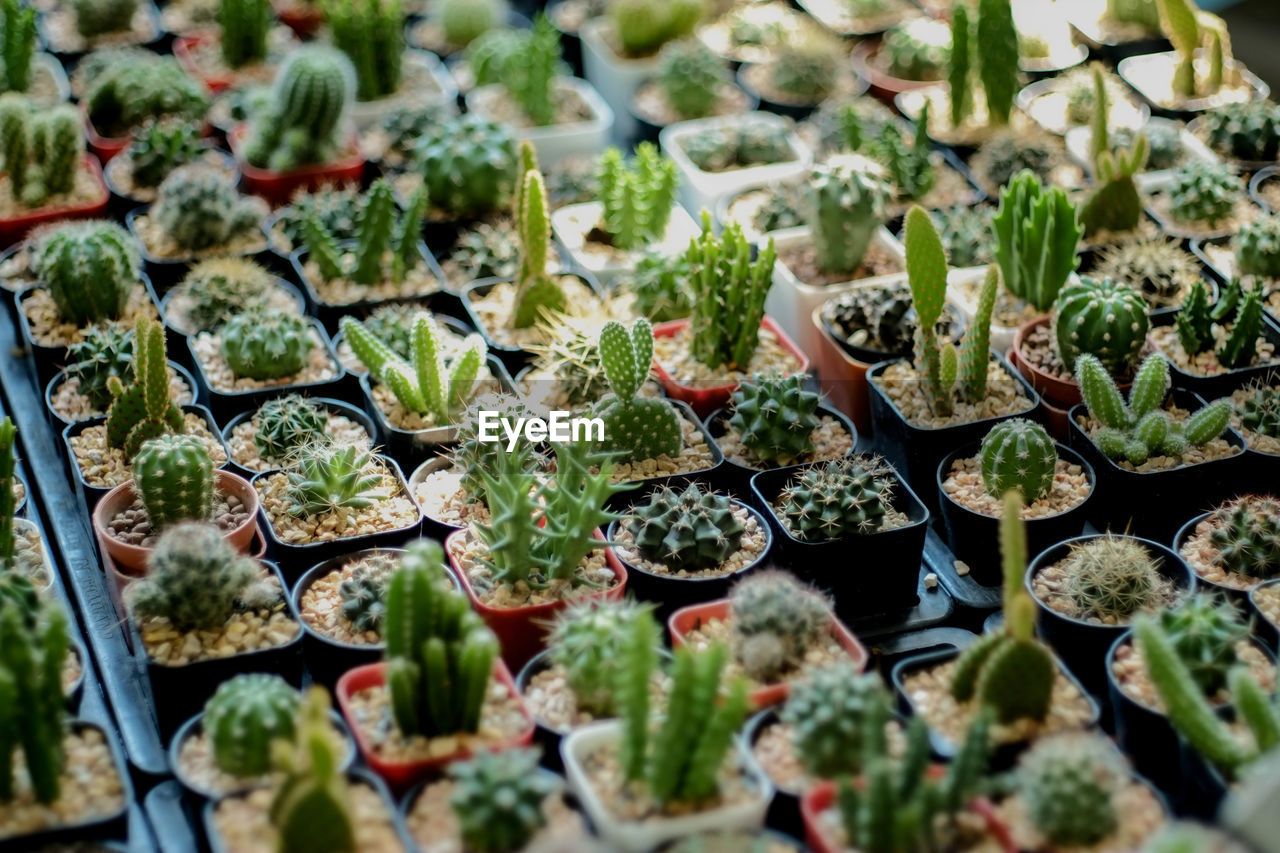 growth, green color, plant, selective focus, no people, nature, potted plant, day, succulent plant, beauty in nature, botany, high angle view, plant nursery, freshness, full frame, close-up, large group of objects, beginnings, food and drink, cactus