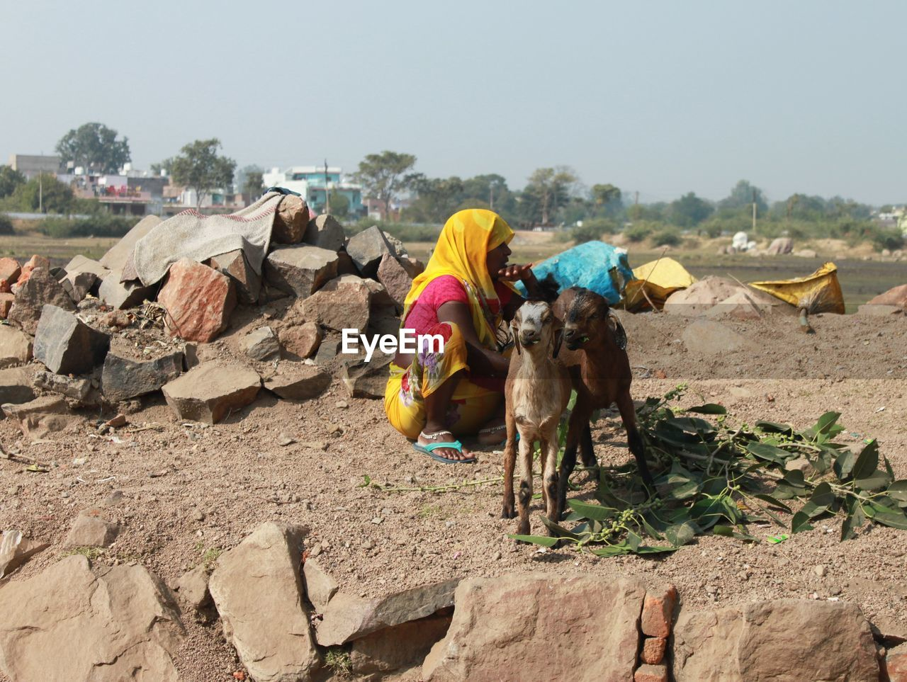 Woman crouching by goats on land against clear sky