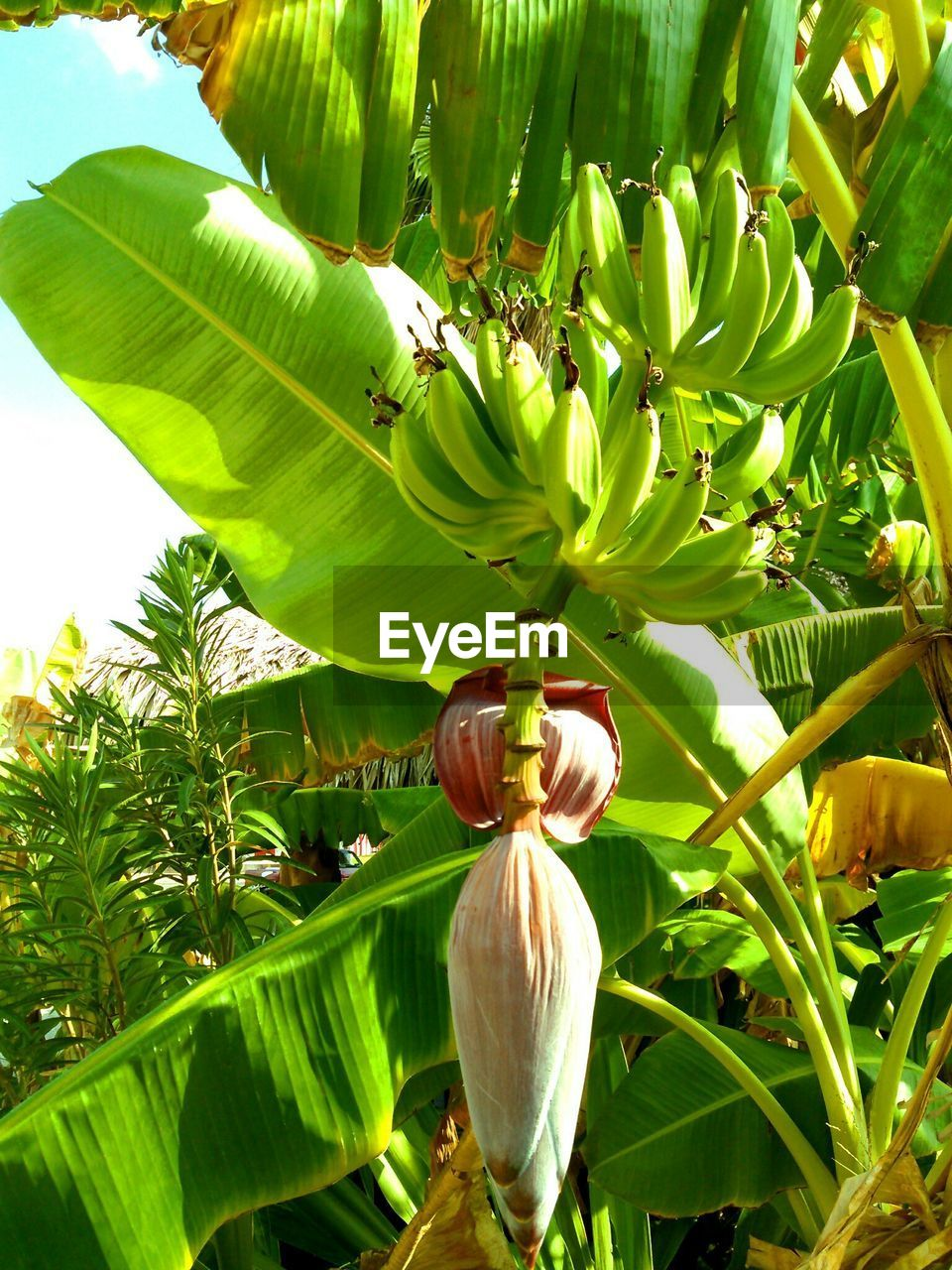 growth, leaf, nature, green color, beauty in nature, freshness, day, plant, no people, banana tree, outdoors, tree, fragility, flower, close-up, animal themes