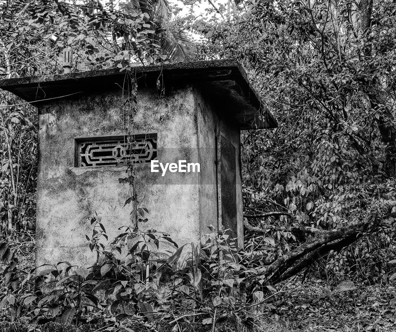 plant, architecture, built structure, tree, no people, land, abandoned, nature, day, old, building exterior, wood - material, damaged, growth, outdoors, house, forest, field, building, plant part, deterioration, ruined