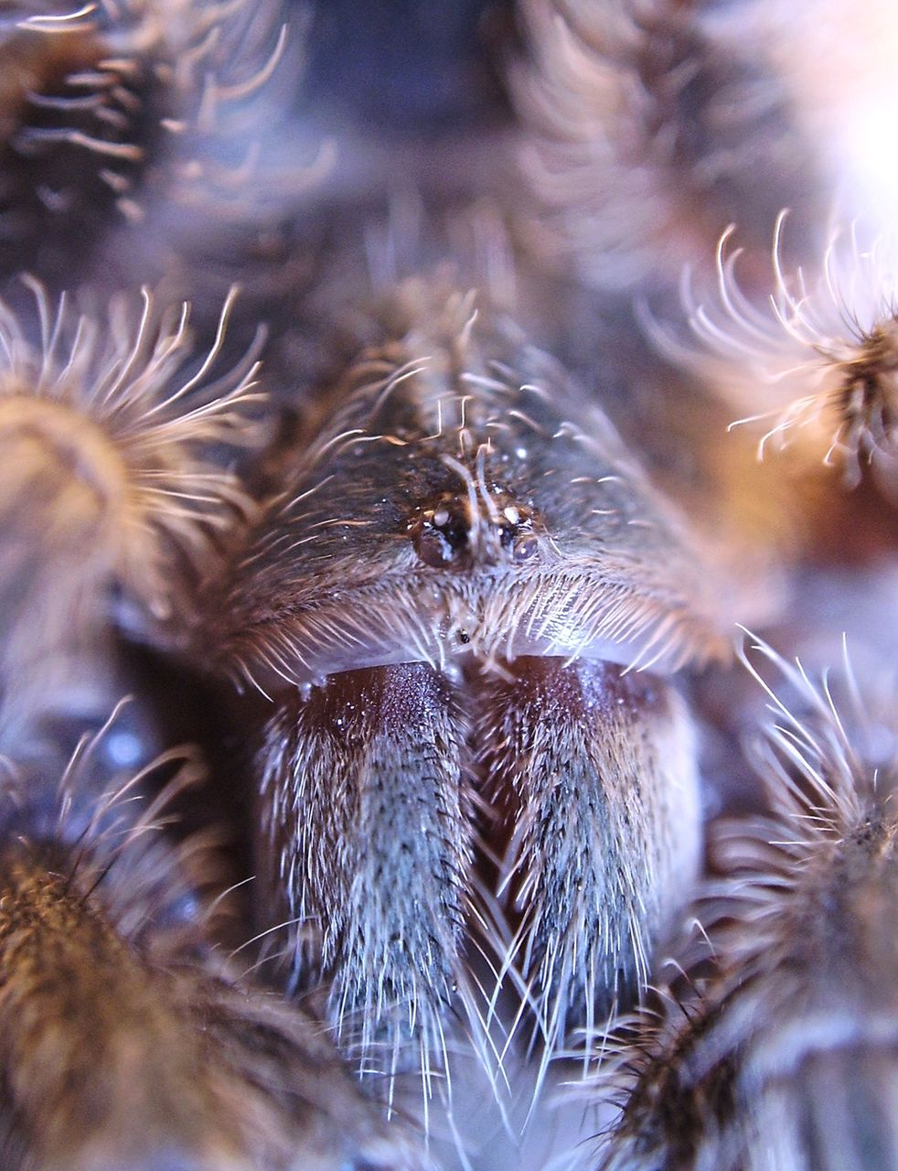 EXTREME CLOSE-UP OF SPIDER