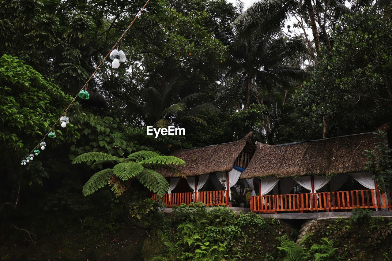 HOUSE AMIDST TREES AND BUILDING