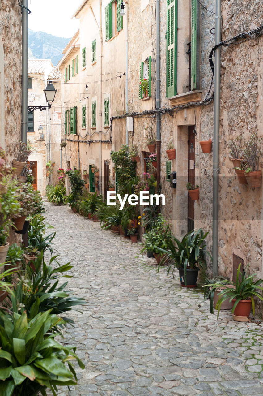 Potted plants on alley amidst buildings in valldemossa