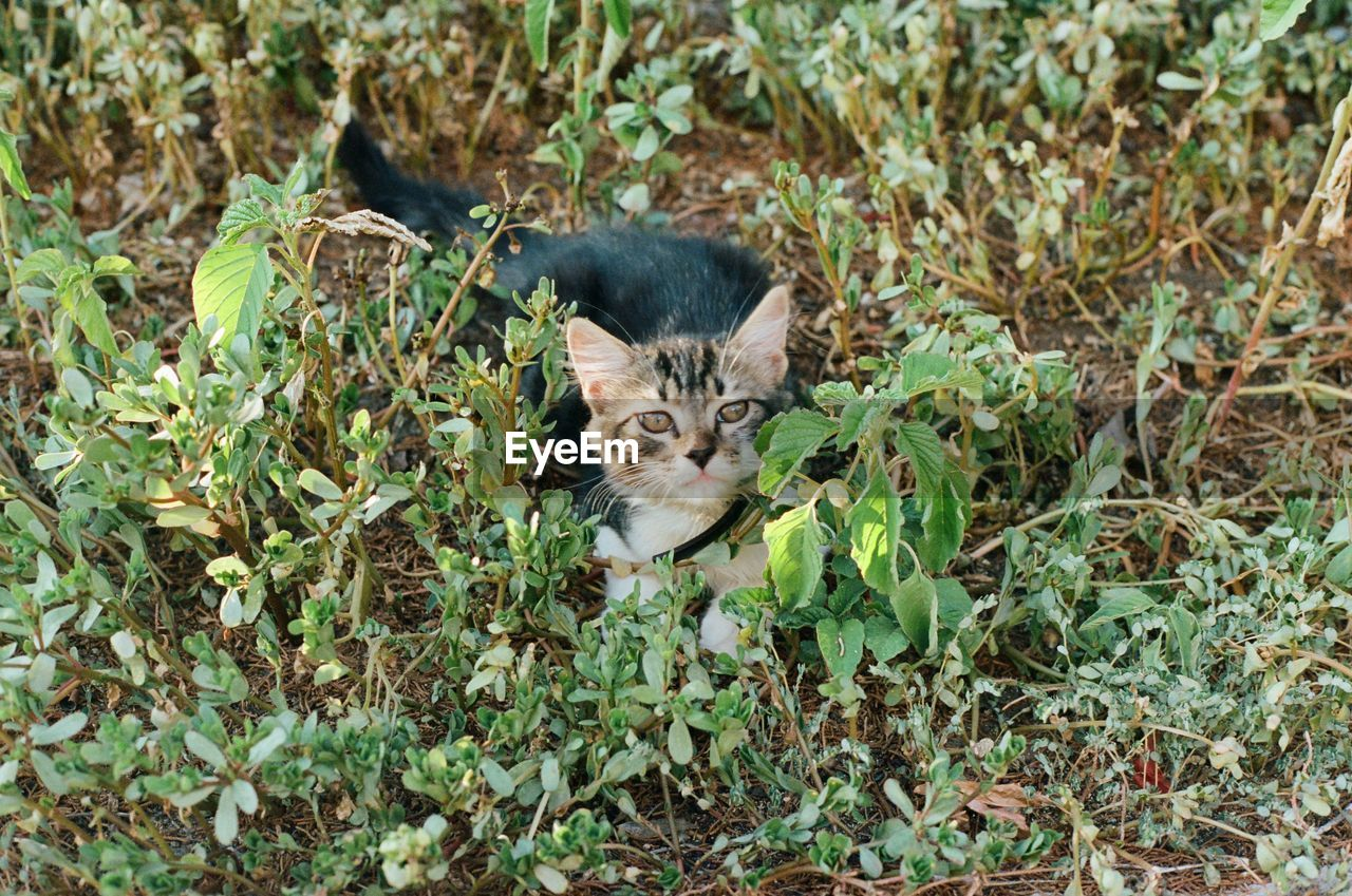 mammal, animal, animal themes, domestic, pets, domestic cat, domestic animals, cat, one animal, feline, looking at camera, portrait, leaf, plant, plant part, vertebrate, no people, nature, land, field, whisker