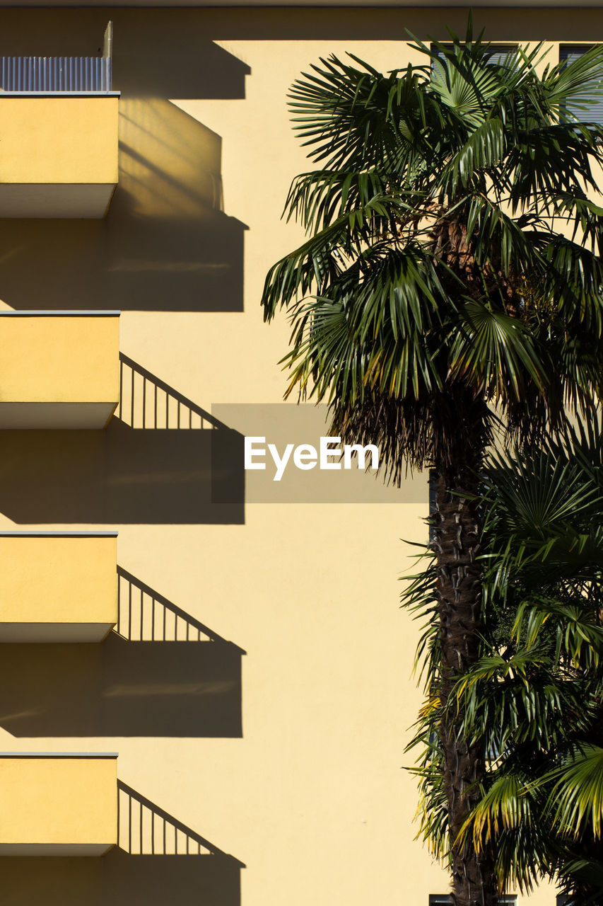 Low Angle View Of Palm Tree By Building Against Clear Sky