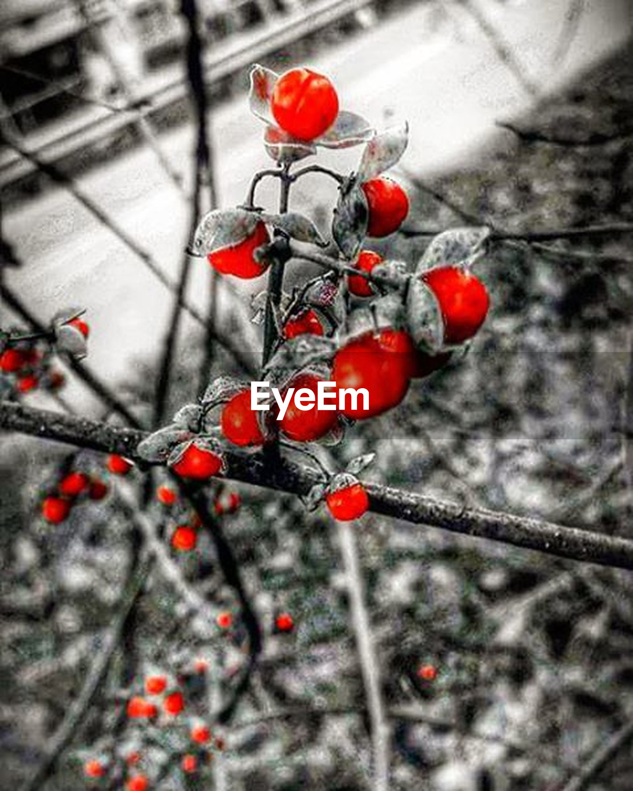 fruit, red, berry fruit, freshness, food and drink, focus on foreground, branch, berry, close-up, cherry, food, growth, selective focus, twig, nature, tree, ripe, healthy eating, hanging, day