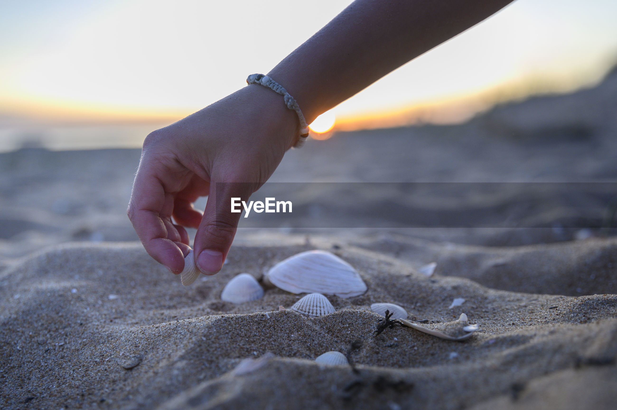 Close-up of hand holding seashell on sand at beach against sky during sunset