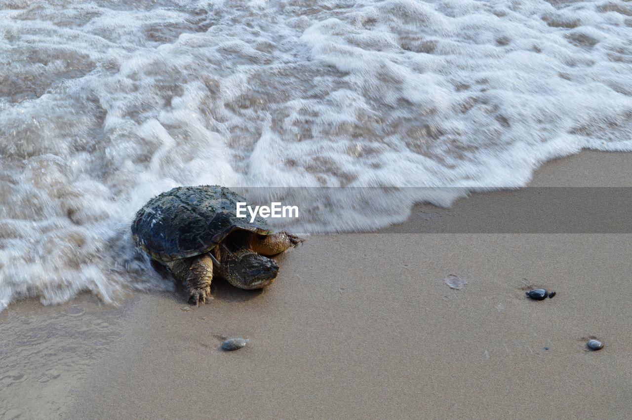 sea, beach, land, turtle, sand, water, motion, reptile, surfing, aquatic sport, animal themes, nature, animal wildlife, animal, shell, sport, tortoise, one animal, animals in the wild, marine