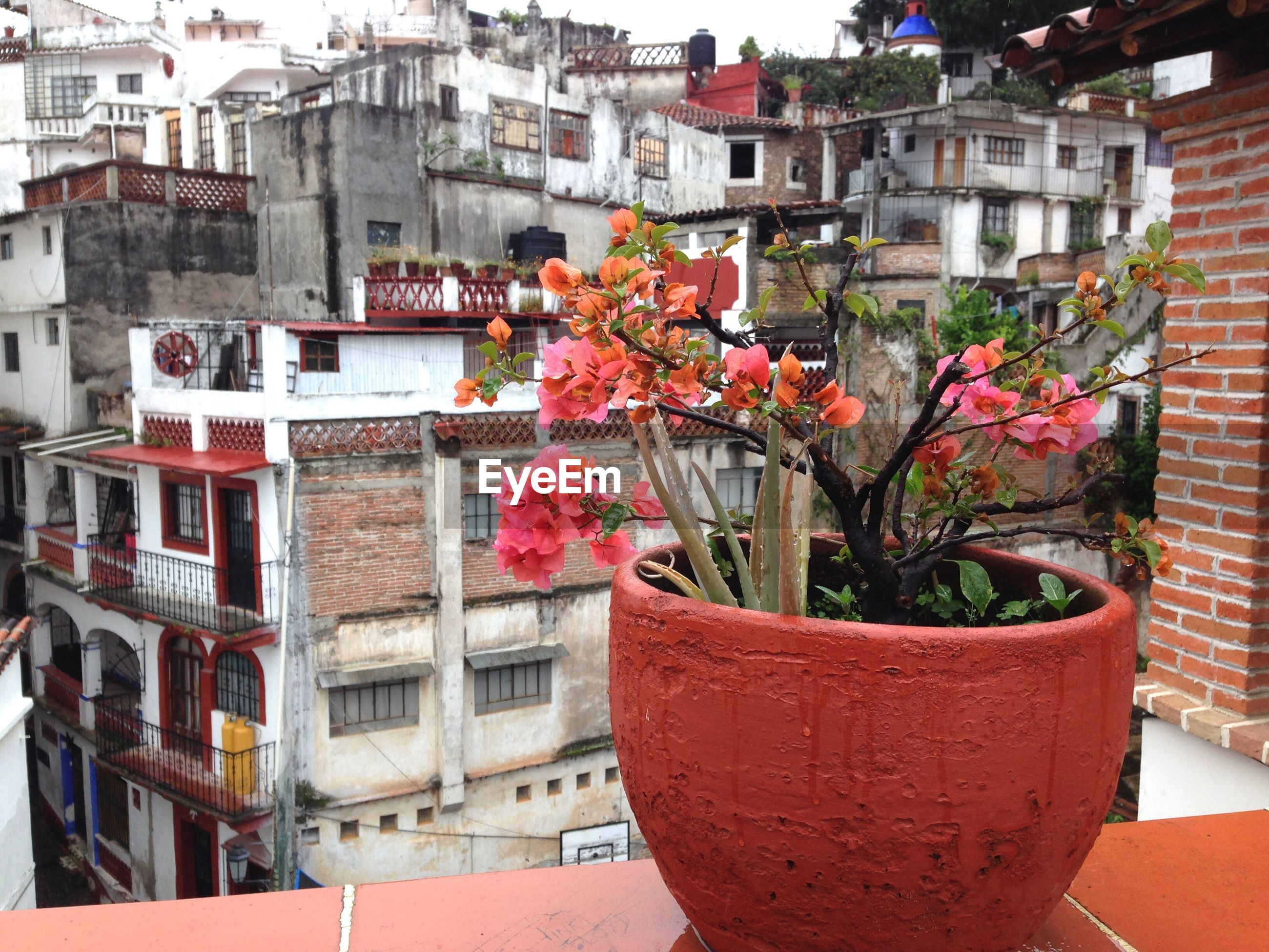 architecture, building exterior, built structure, flower, red, city, window box, outdoors, residential building, house, no people, nature, day, balcony, cityscape