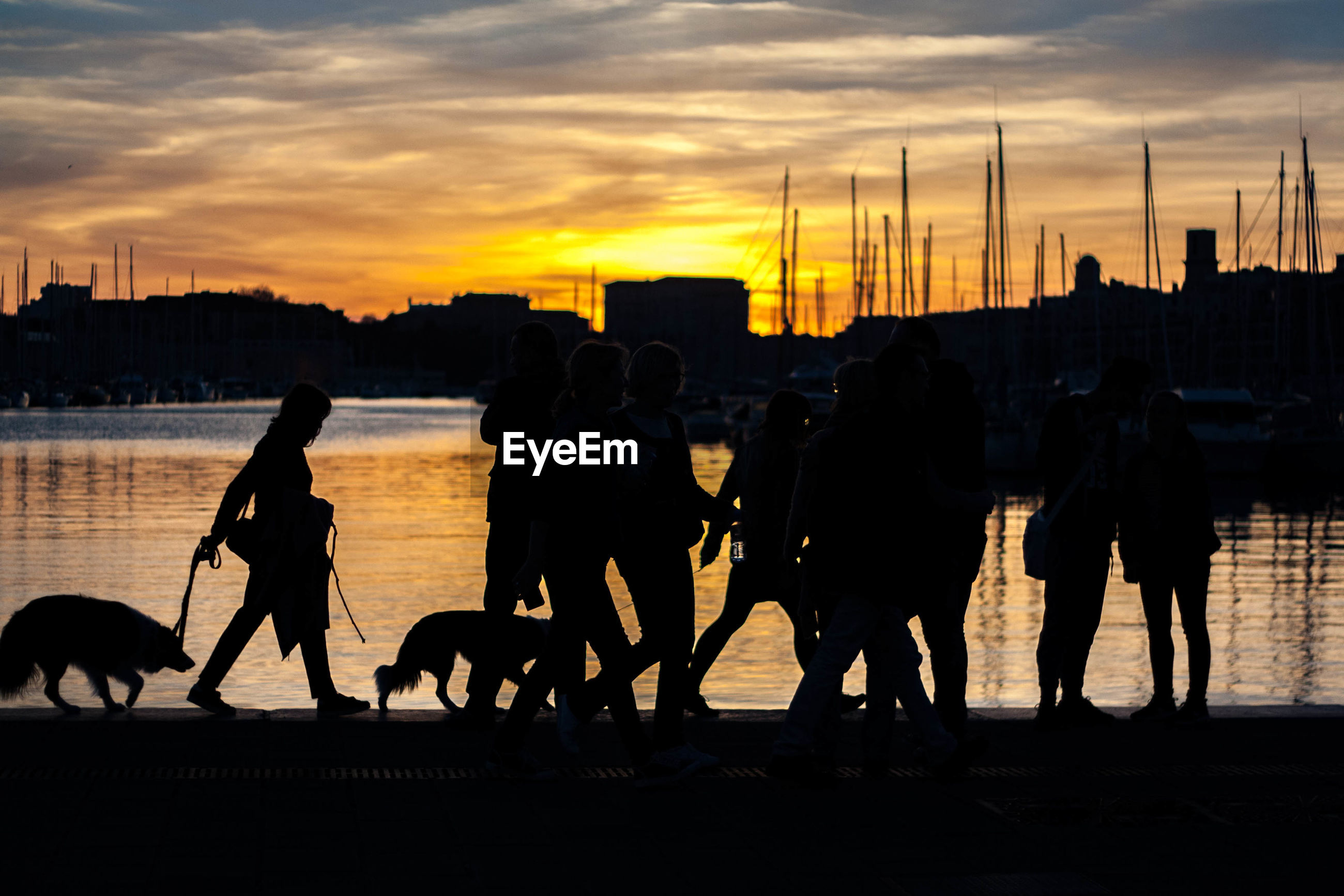 SILHOUETTE OF PEOPLE WITH DOGS IN BACKGROUND