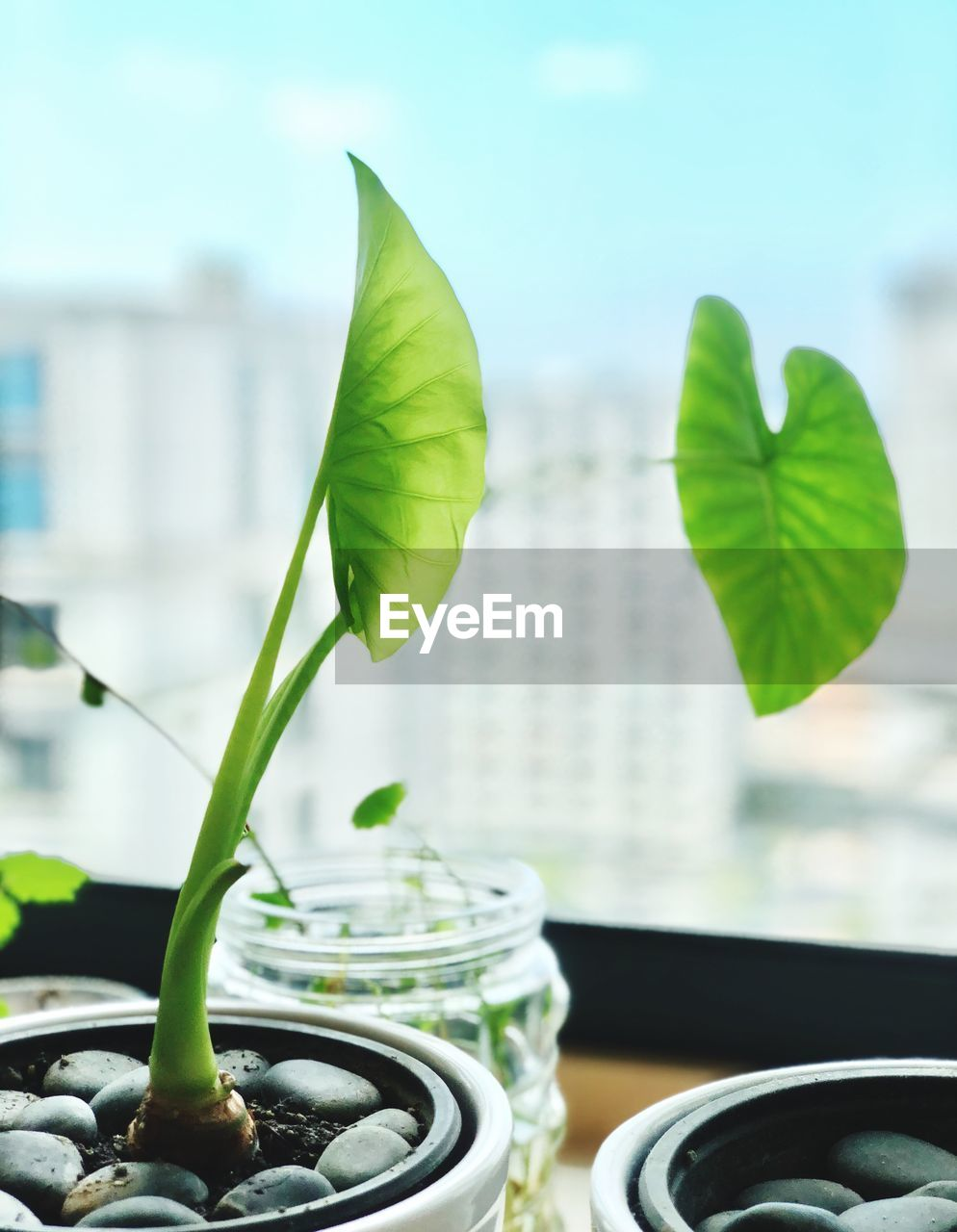 leaf, plant part, close-up, focus on foreground, no people, nature, freshness, green color, plant, still life, indoors, growth, day, food and drink, table, food, selective focus, window, potted plant, leaves