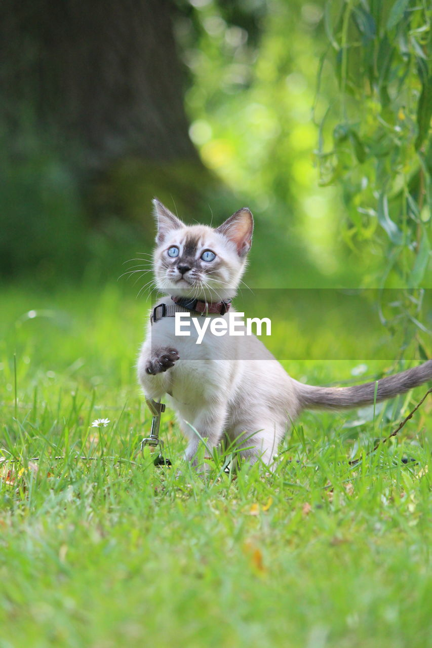 one animal, animal themes, pets, domestic, animal, mammal, plant, domestic animals, domestic cat, vertebrate, cat, feline, grass, land, no people, green color, day, selective focus, nature, field, outdoors, whisker