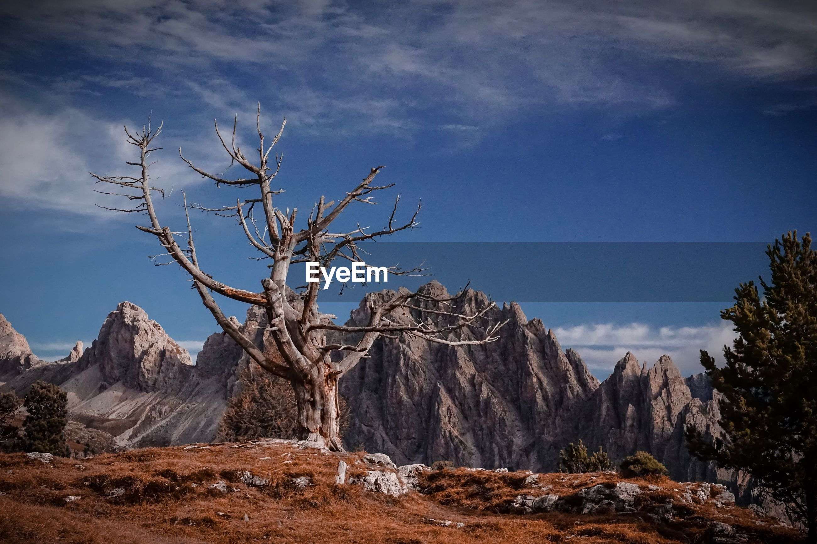BARE TREE AGAINST MOUNTAIN