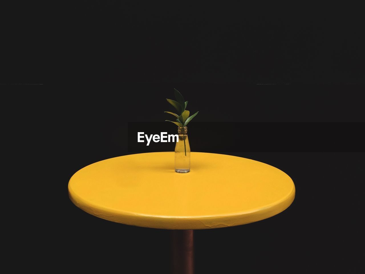Plant in glass bottle on yellow table against black background