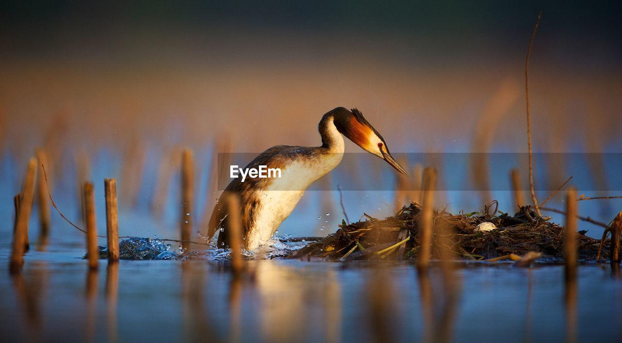 Close-Up Of Heron Perching By Lake