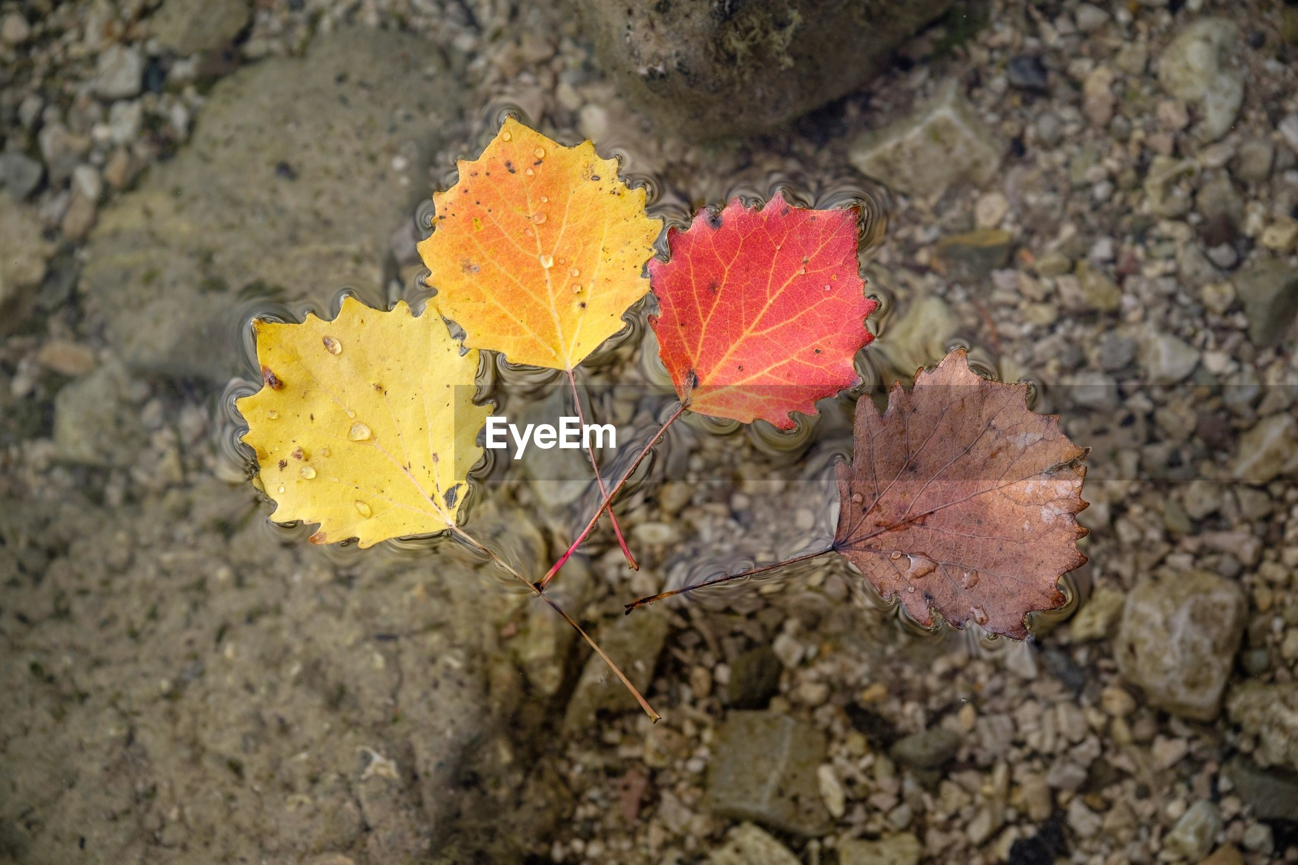 High angle view of dry leaves floating on lake