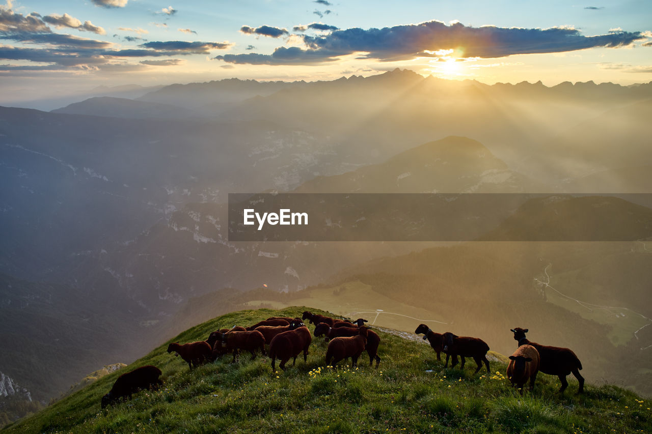 mountain, mammal, animal themes, sky, beauty in nature, livestock, animal, scenics - nature, group of animals, domestic animals, sunset, nature, domestic, environment, cloud - sky, pets, field, landscape, land, sunlight, mountain range, lens flare, sun, outdoors, herbivorous