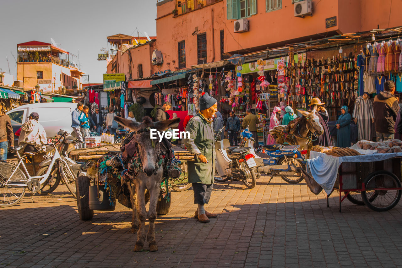 group of people, building exterior, city, architecture, real people, street, built structure, domestic animals, domestic, men, pets, large group of people, mammal, transportation, women, crowd, livestock, adult, lifestyles, outdoors