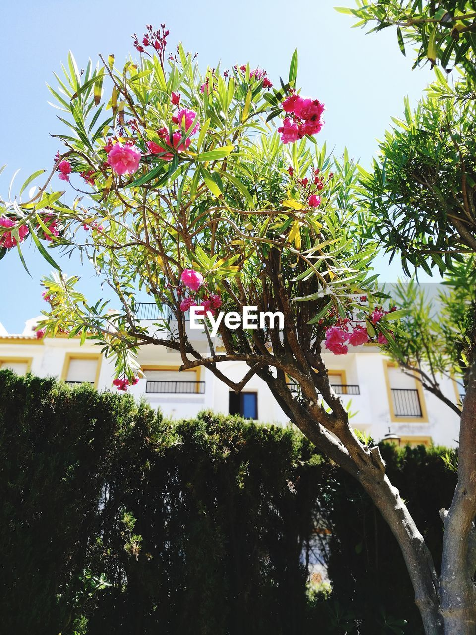 tree, growth, flower, no people, low angle view, pink color, day, freshness, nature, beauty in nature, outdoors, branch, building exterior, fragility, architecture, built structure, close-up, sky