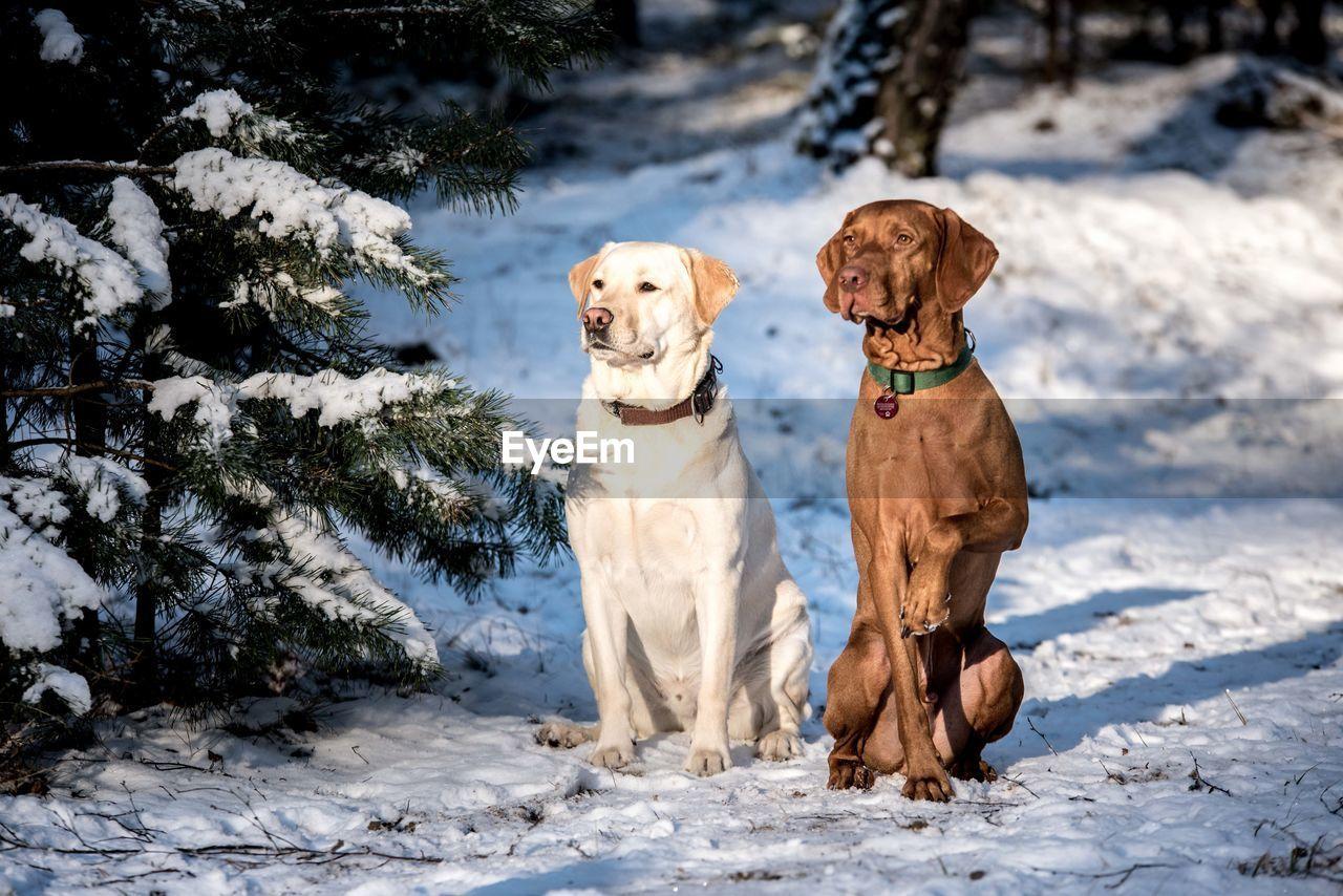 Portrait Of Dogs In Winter