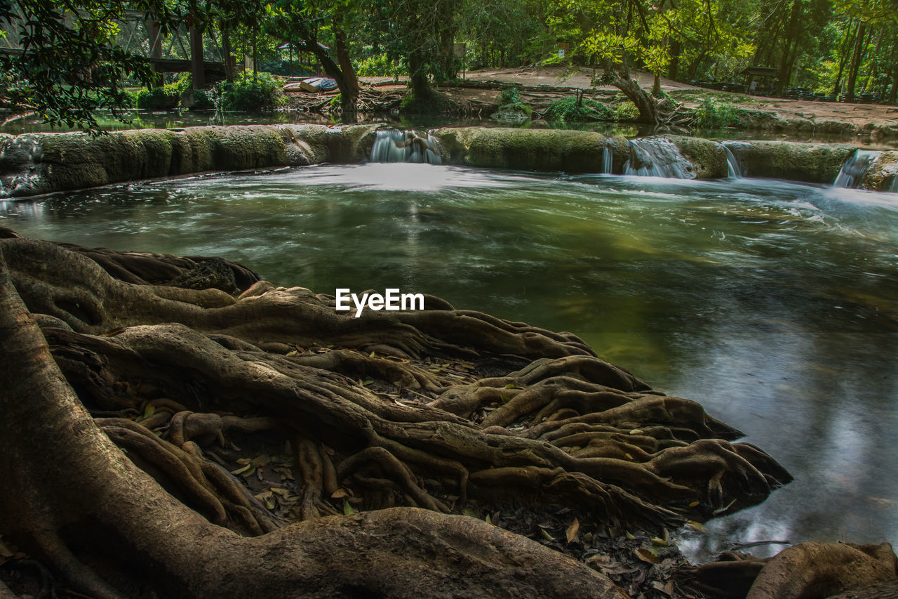 water, tree, forest, nature, beauty in nature, motion, plant, scenics - nature, no people, rock, long exposure, waterfall, solid, flowing water, day, rock - object, tranquility, river, outdoors, flowing, driftwood
