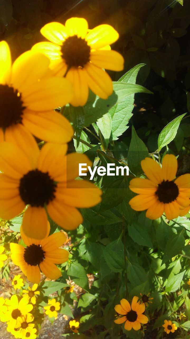 flowering plant, yellow, flower, beauty in nature, fragility, vulnerability, freshness, petal, plant, flower head, inflorescence, growth, nature, close-up, no people, day, pollen, plant part, leaf, outdoors